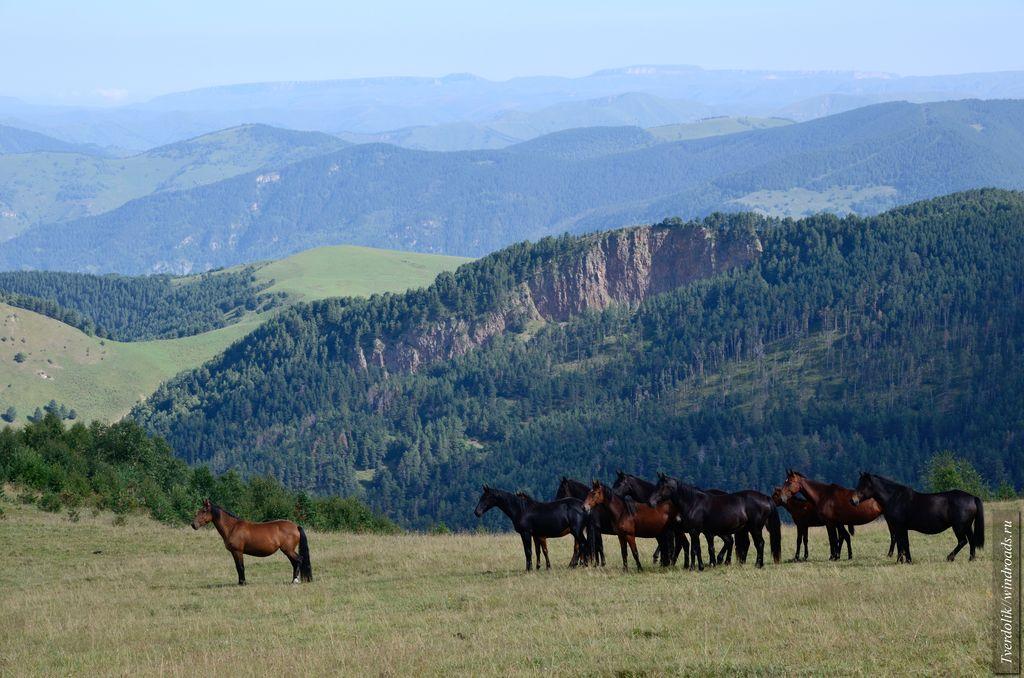 """Встречные нами лошади отличались большим любопытством и словно задавались вопросом: """"Неужели кентавры существуют?"""""""